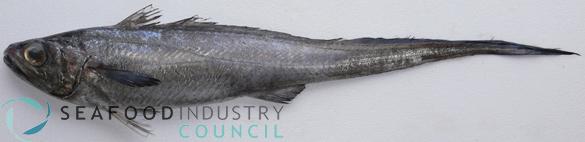 Hoki for Mcdonalds fish fillet price